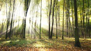 Energietraeger aus der Natur